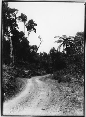 Glass plate negative – Road through Waipoua Forest