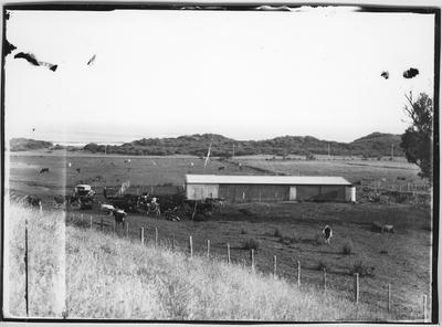 Glass plate negative – G.S. Moody's Farm, Opotiki