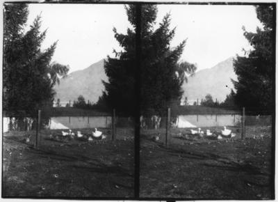 Glass plate negative – stereoview of scenic view