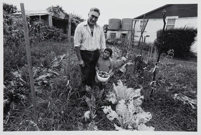 Keith Buckley and Son Peter in Keith's Vegetable Garden: Rotowaro