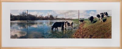 Winter Flooding at Rangiriri; David Cook; Jun 1994; 1995/18/9