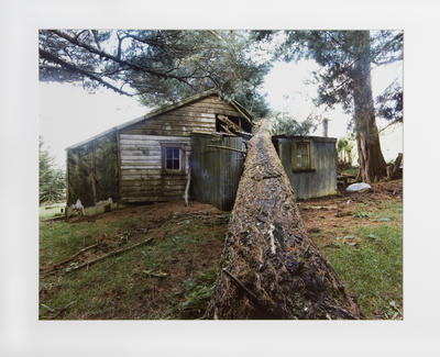 School Building and Felled Tree