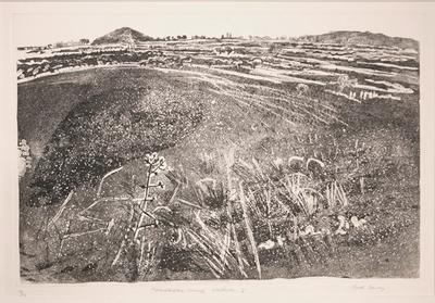 Moanatuatua Swamp Waikato I