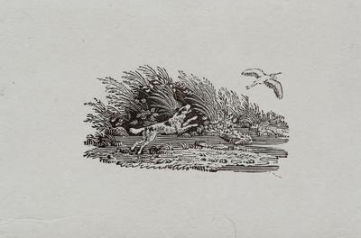 Animals - Dog Chasing Heron In Flight. Tailpiece to Greenshank, History of British Birds Vol II