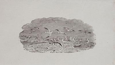 Sea Birds In Flight & Resting On Sand.Tailpiece to Godwit, History of British Birds Vol II