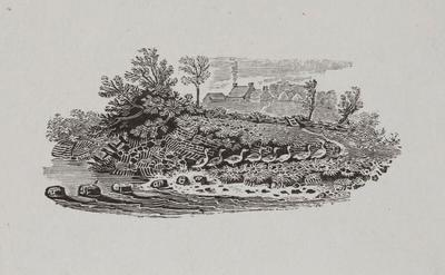 [Country Farm and With Geese]Tailpiece to Tufted Duck, History of British Birds Vol II; Thomas Bewick; 1826; 1972/47/62