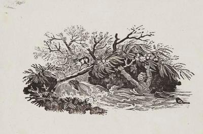 Falling From Trees; Tailpiece to Shore Sandpiper, History of British Birds Vol II