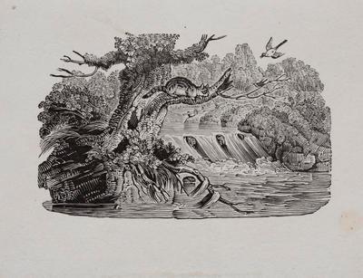 Animals Tailpiece to Turnstone, History of British Birds Vol II