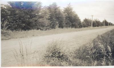 Photograph - flaxgrowing at Gordonton