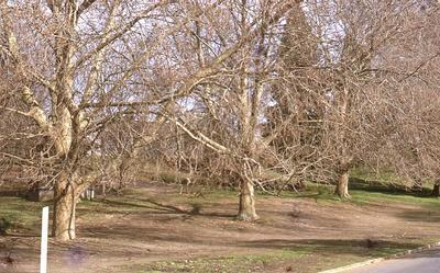 Slide - trees on river bank to be removed