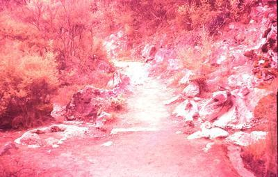 Slide - Path at Orakei Korako