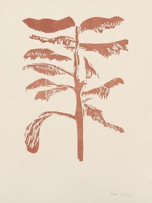 Untitled [cedar tree]