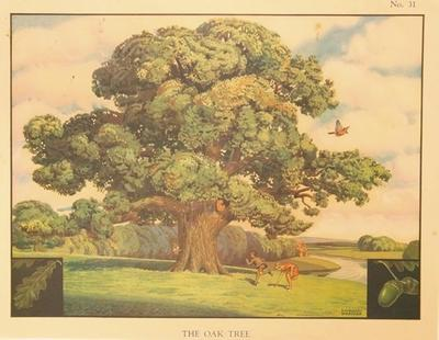 No.31 The Oak Tree