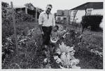 Keith Buckley and Son Peter in Keith's Vegetable Garden: Rotowaro